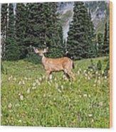 Deer Cervidae In Paradise Park In Mt Wood Print