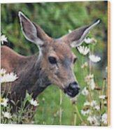 Deer In Daisies Wood Print
