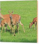 Deer Looking At You Wood Print