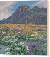 Desert Sand Verbena, Desert Sunflower Wood Print