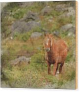 Digital Watercolor Painting Of Stunning Image Of Wild Pony In Sn Wood Print