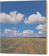 Dirt Road On Prairie With Cumulus Sky Wood Print