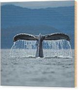 Diving Humpback Whale, Alaska Wood Print