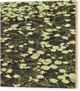 Dnrs1007 Wood Print