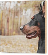 Doberman Pinscher On The Background Of Wood Print