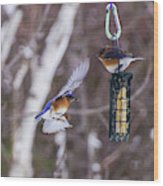 Docking Bluebird Wood Print