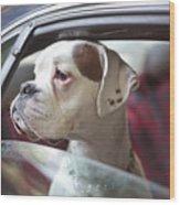 Dog In A Car Wood Print