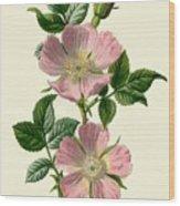 Dog-rose Wood Print