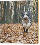 Dog Running In Forest Wood Print