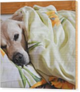 Dog Sleeps Under The Blanket Wood Print