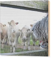 Dog Watching Cows Through Fence Wood Print