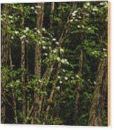 Dogwood Tree 2 Wood Print