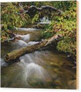 Dogwoods Along The Provo Deer Creek Wood Print