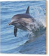 Dolphin Riding Wake Wood Print