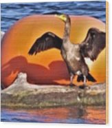 Double Crested Cormorant    Drying Wings         September        Indiana Wood Print
