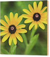Double Daisies Wood Print