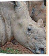 Double Rhino Wood Print