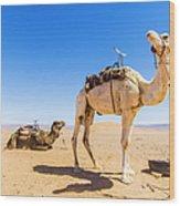Draa Valley, Camel At Tinfou Wood Print