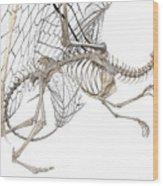 Dragon Skeleton  Wood Print