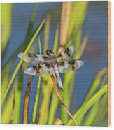 Dragonfly Perched By Pond Wood Print