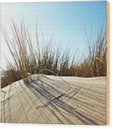 Dune Grass On A Sand Dune At The Beach Wood Print