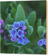 Dwarf Bluebell Detail Wood Print