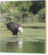 Eagle's Drink Wood Print