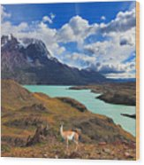 Early Autumn In Patagonia. National Wood Print