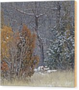Early Winter On The Western Edge Wood Print
