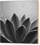 Echeveria Setosa Wood Print