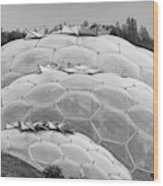 Eden Project Biome  Wood Print