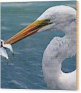 Egret Feeding  Wood Print