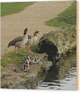 Egyptian Geese Wood Print