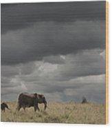 Elephant Under Cloudy Sky Wood Print