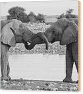 Elephants Curling Trunk Wood Print