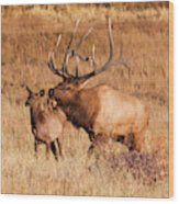 Elk And Mate In Rocky Mountain Meadow Wood Print