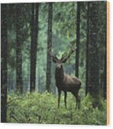 Elk In Forest Wood Print