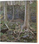 Elora 4 Wood Print