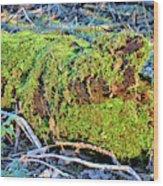 Emerald Tree Wood Print