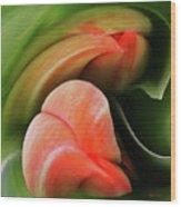 Emerging Tulips Wood Print