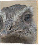 Emu Print 9053 Wood Print