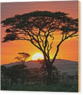 End Of A Safari-day In The Serengeti Wood Print