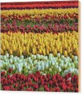 Endless Beautiful Tulip Fields Wood Print