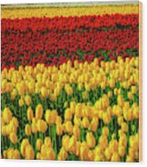 Endless Tulip Fields Wood Print