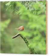 English Robin Erithacus Rubecula Wood Print