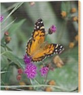 Equinox Butterfly  Wood Print