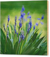 Essense Of Spring Wood Print