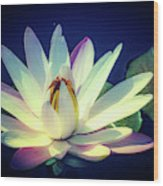 Evening Water Lily Wood Print