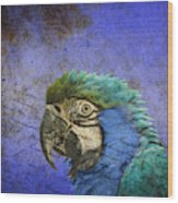 Blue Exotic Parrot- Pirates Of The Caribbean Wood Print