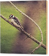 Faded Canvas Woodpecker Wood Print